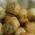 Salatini con olive e philadelphia