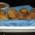 Polpette di lenticchie cotte nel forno